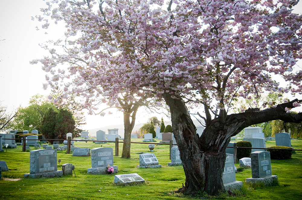 Maple Hill Cemetery grounds in spring